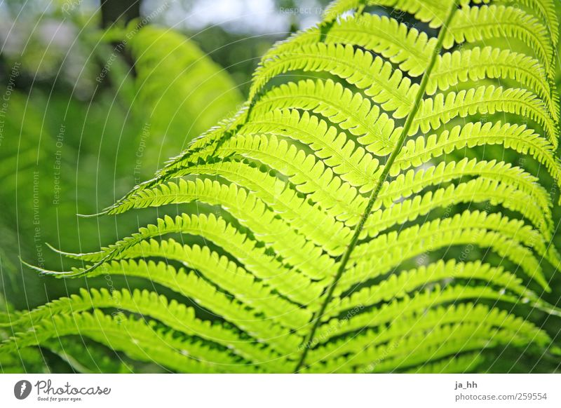 fern Garden Nature Grass Bushes Fern Leaf Foliage plant Wild plant Park Growth Green Environmental protection Gardening Cast Weed Forest plant Global