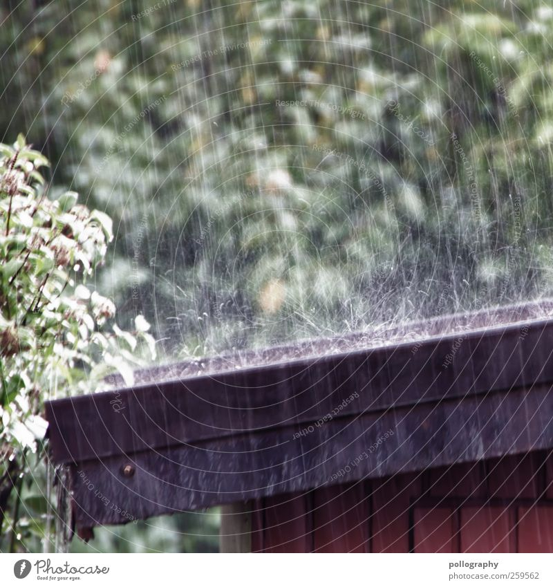 raindrops keep falling... Environment Nature Water Drops of water Rain Plant Tree Bushes Leaf Foliage plant Brown Green Black Roof Eaves Wood Gardenhouse Unload