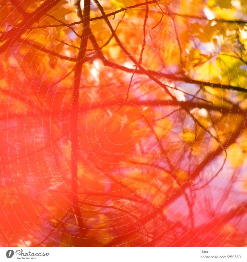 Plant Autumn Bright Autumnal Branchage Undergrowth Bright Colours