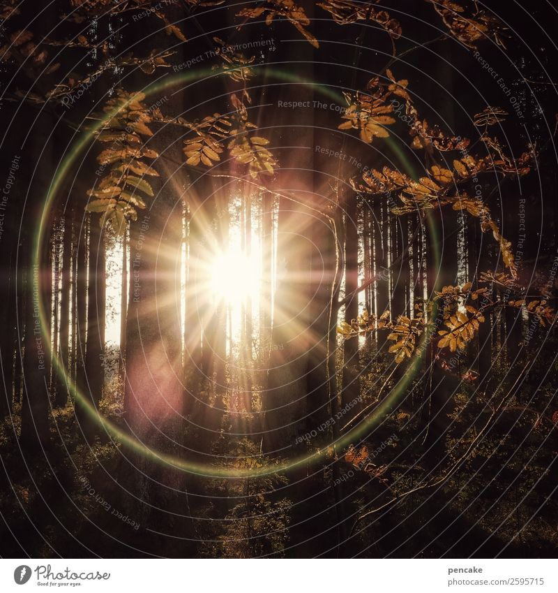 Ring of Fire Nature Landscape Elements Sun Autumn Beautiful weather Tree Leaf Forest Sign Exceptional Bright Round Automn wood Circle Blur Reflection Warmth