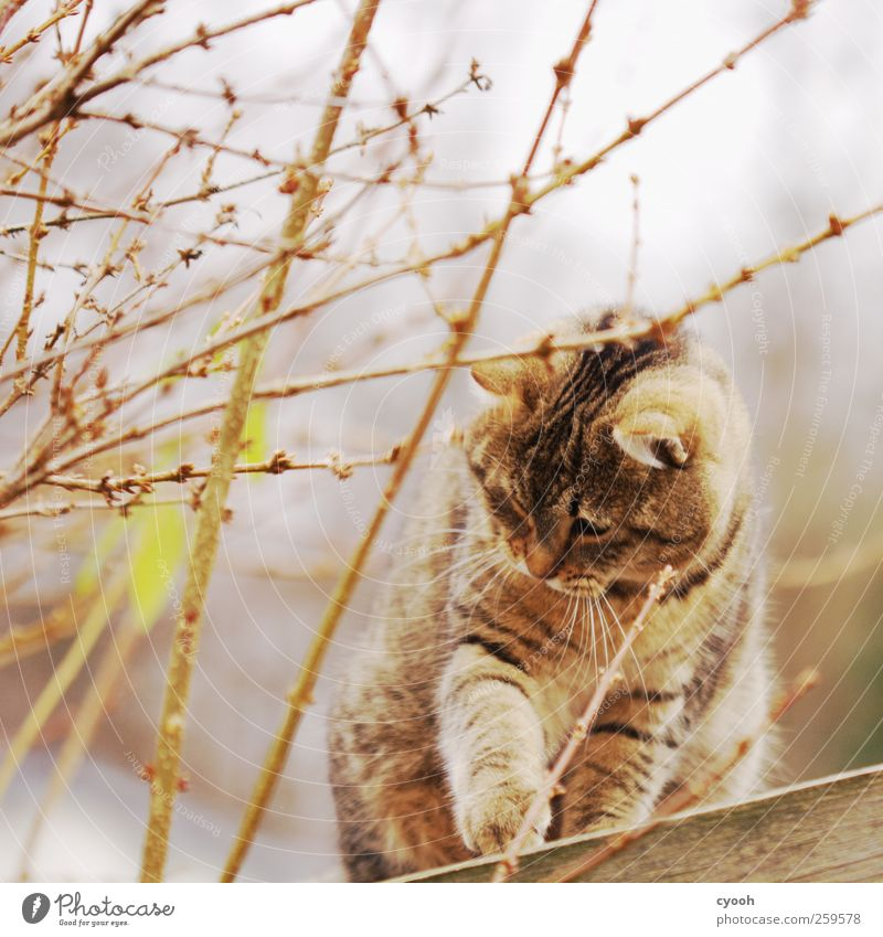 Are you playing with me? Animal Pet Wild animal Cat 1 Movement Discover Wait Dark Friendliness Beautiful Curiosity Cute Brown Gold Motionless Observe Hunting