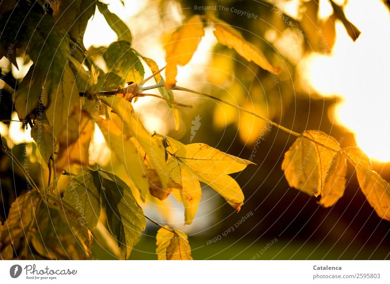 Sky Nature Plant Beautiful Green Sun Tree Animal Leaf Yellow Autumn Garden Orange Brown Moody Gold