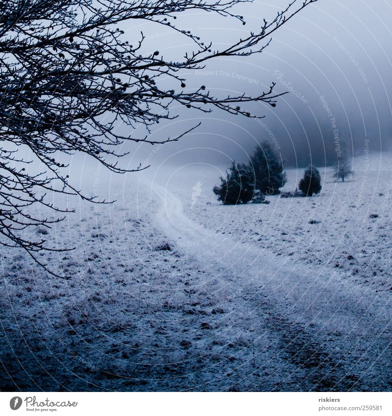a breath of winter Environment Nature Landscape Winter Fog Ice Frost Snow Meadow Forest Dark Cold Blue Black Lanes & trails Lowland Colour photo Exterior shot