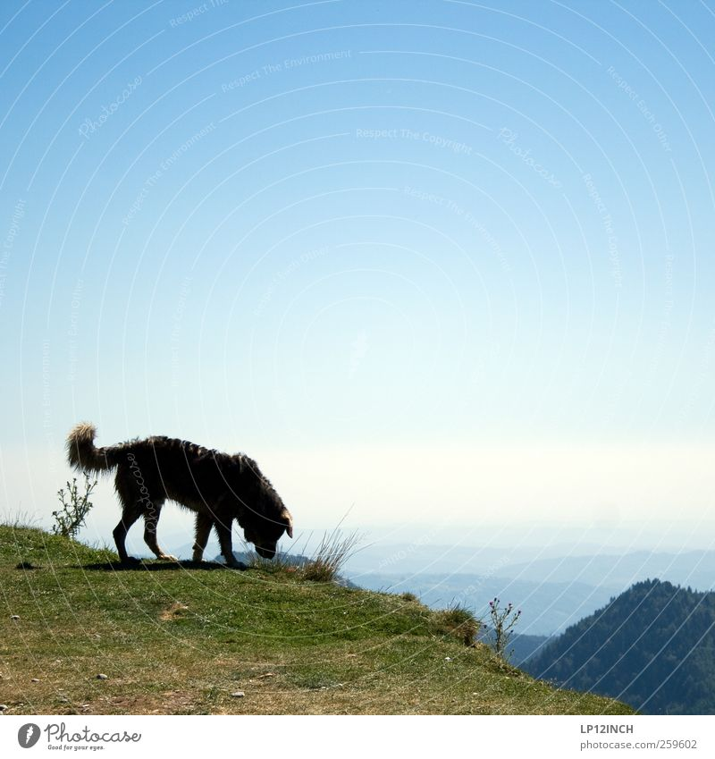 Sky Nature Dog Summer Far-off places Environment Landscape Mountain Hiking Europe Curiosity Beautiful weather Vantage point Romania Walk the dog