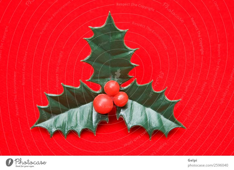 The holly typical ornament of christmas Fruit Design Winter Decoration Feasts & Celebrations Christmas & Advent Nature Plant Leaf Ornament Natural New Green Red