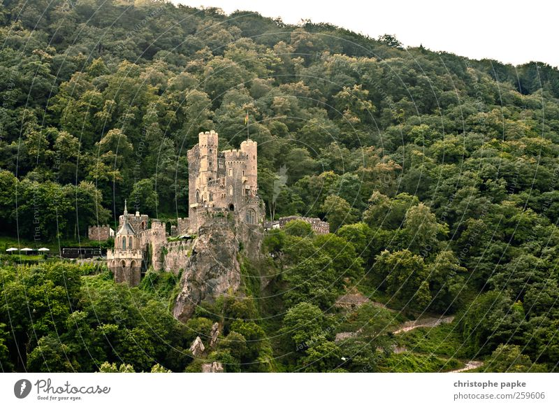 sweet home... Forest Rheingau Ruin Facade Old Historic Beautiful Might Protection Knight Fairy tale Tower Vantage point Rhine Medieval times Colour photo