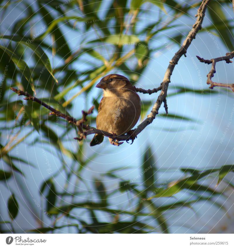 Sky Nature Plant Sun Summer Leaf Animal Autumn Environment Small Spring Park Weather Bird Observe Near