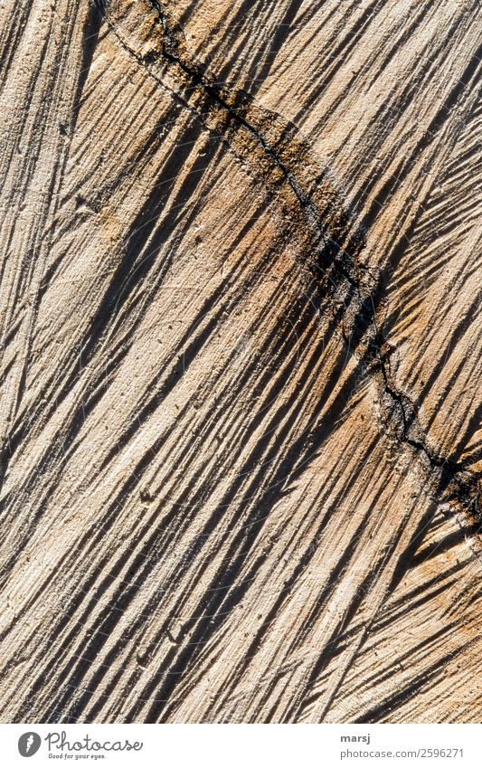 Pretty crooked Wood grain Crack & Rip & Tear Authentic Sharp-edged Uniqueness Broken Natural Brown Power rutted saw cut cutting marks Annual ring Log