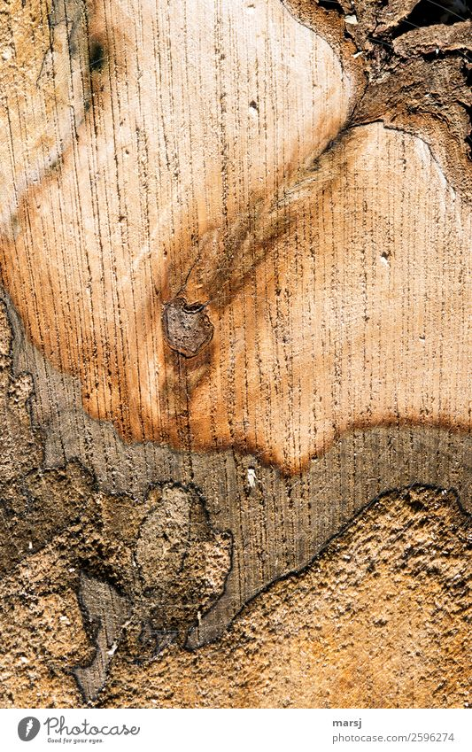 How sliced bread Wood grain Annual ring Uniqueness Natural Brown Cut Maple tree Putrefy cutting surface saw marks Tree bark Strange Colour photo Subdued colour