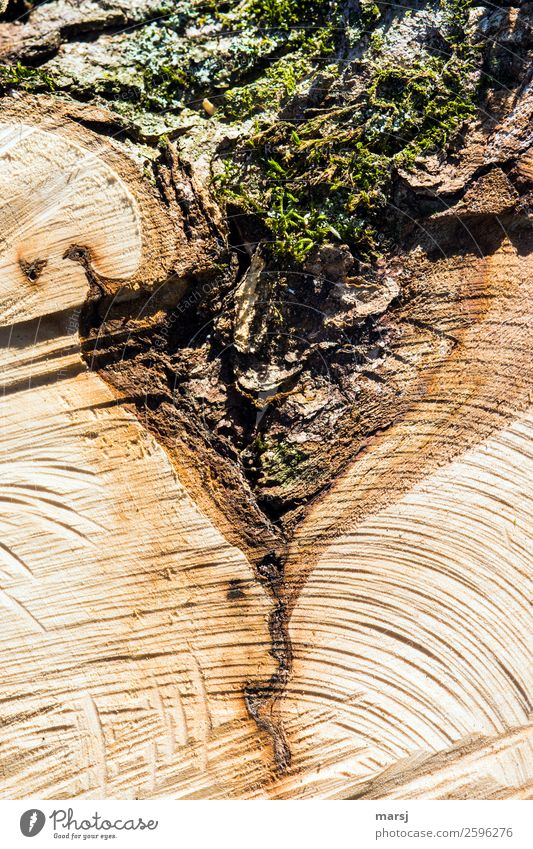Moss triangle or what? Plant Flower Tree stump Wood grain Exceptional Authentic Natural Dry Brown Uniqueness Nature Whimsical Destruction Tree bark Triangle