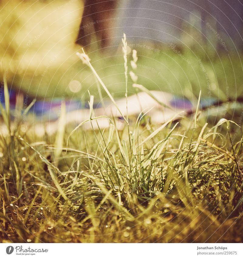 grass Environment Nature Landscape Summer Beautiful weather Grass Esthetic Brown Green Happy Contentment Joie de vivre (Vitality) Picnic Blanket Tent camp