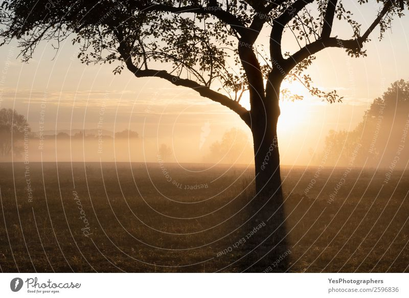 Sunrise through the fog over tree silhouette Nature Landscape Autumn Beautiful weather Fog Tree Meadow Forest Dream Bright Yellow Gold Surrealism Germany