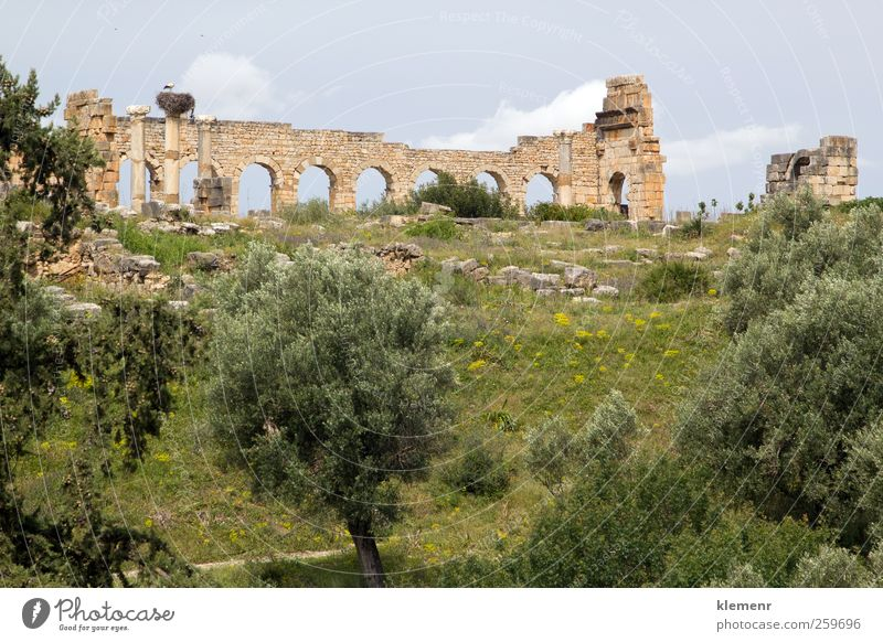 Old Roman City, Volubilis, Morocco Landscape Earth Tree Town Ruin Architecture Monument Stone Historic history Africa World heritage Rome wall Moroccan arch