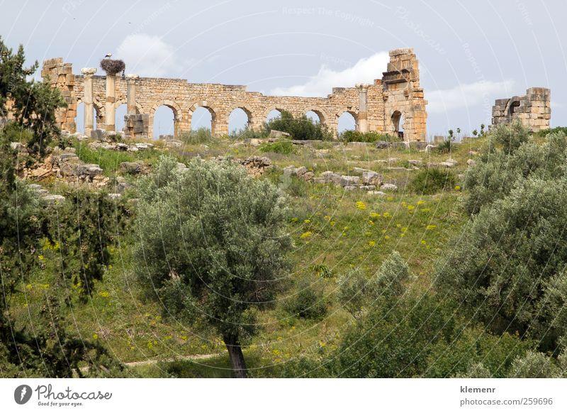 Old Roman City, Volubilis, Morocco Tree Landscape Architecture Stone Earth Africa Monument Historic Ruin Rome Temple North Site World heritage