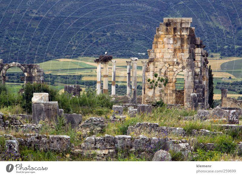 Old Roman Columns and Citry Entrance, Volubilis, Morocco Sky City Tree Landscape Architecture Stone Earth Monument Historic Ruin Ancient Rome North