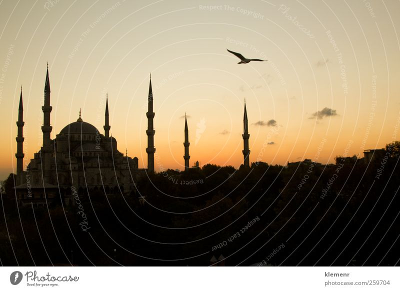 The Beautiful Blue Mosque in Istanbul in sunset scene Vacation & Travel Tourism Landscape Earth Church Building Architecture Monument Historic Pink