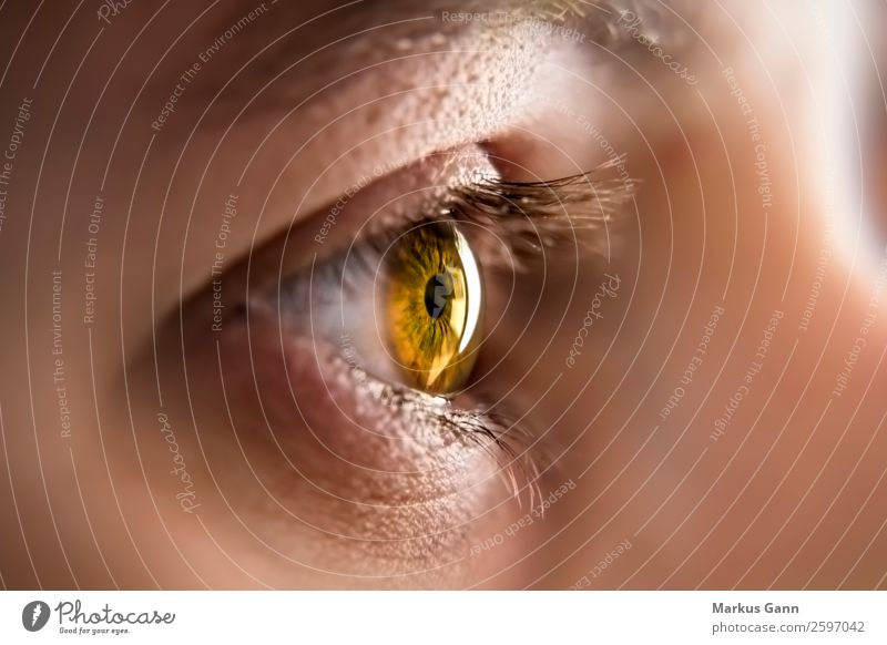Eye of a young woman Beautiful Face Health care Human being Woman Adults Eyes Observe Brown Black White Colour Iris close up pupil Beauty Photography Eyelash
