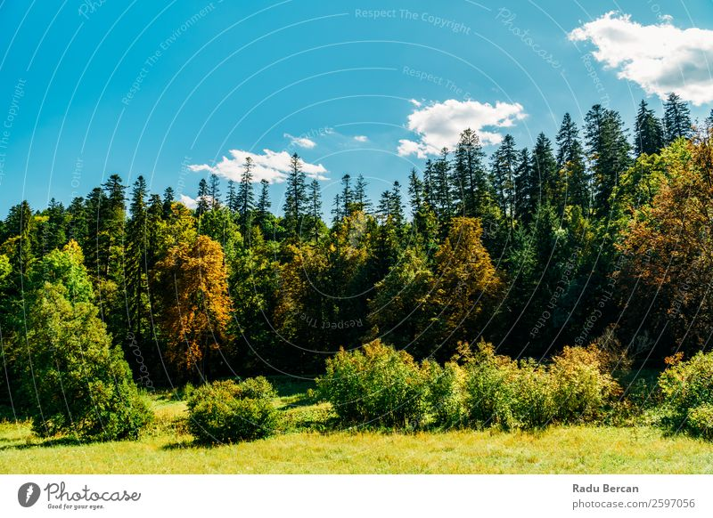 Beautiful Carpathian Mountains Summer Landscape In Romania carpathian Nature scenery Forest Panorama (Format) Sky Carpathians Green Vantage point