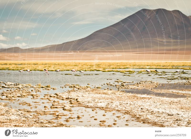 Sky Nature Summer Environment Landscape Mountain Lake Bright Earth Climate Elements Beautiful weather Chile South America Pastel tone Flamingo