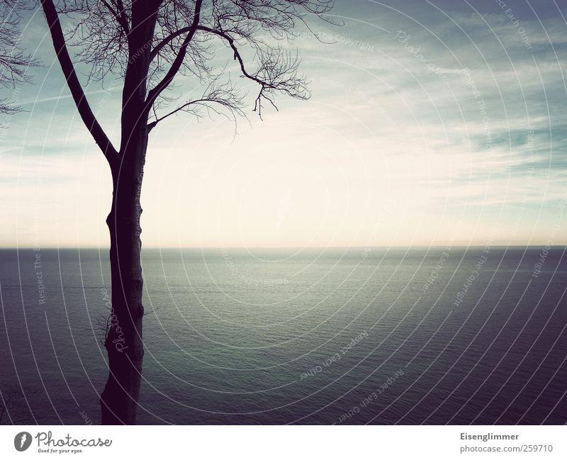 Sky Blue Heaven Water White Tree Ocean Landscape Clouds Far-off places Winter Horizon Esthetic Island Baltic Sea Rügen