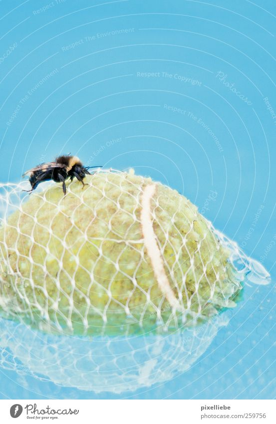 Prisoner tennis ball Swimming & Bathing Ocean Ball sports Nature Water Summer On board Animal Bee Wing 1 Net Network Dive Fluid Small Round Thorny Blue