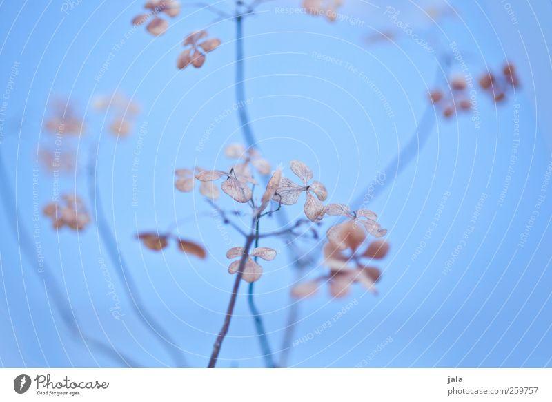 Nature Blue Plant Leaf Environment Blossom Brown Natural Esthetic