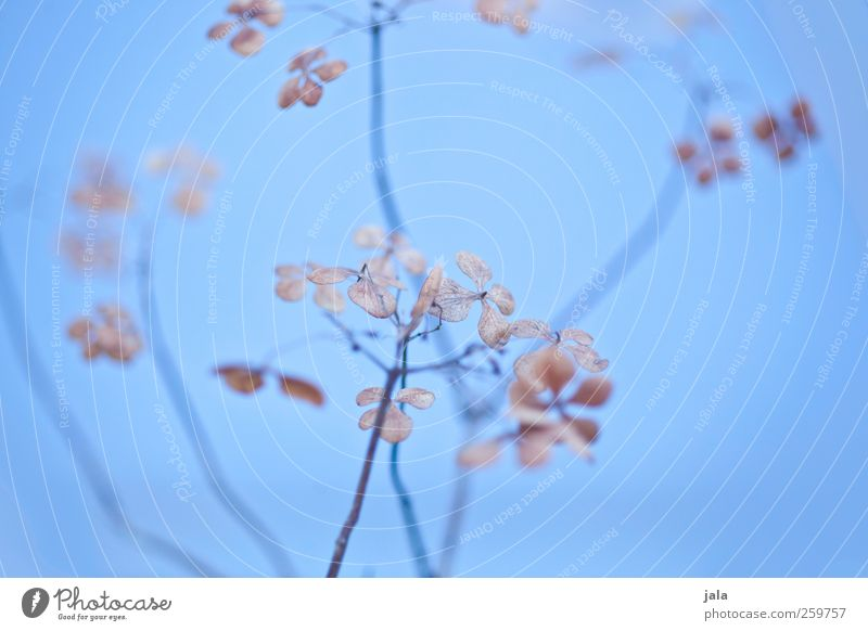 Nature Blue Plant Leaf Environment Blossom Brown Natural Esthetic