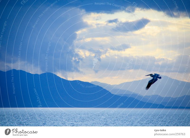 Nature Blue Water White Summer Ocean Animal Loneliness Clouds Calm Landscape Mountain Movement Freedom Air Bird