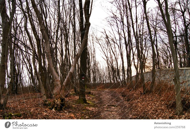 Sky Nature White Tree Red Plant Winter Leaf Black Forest Autumn Environment Landscape Wall (building) Lanes & trails Wall (barrier)