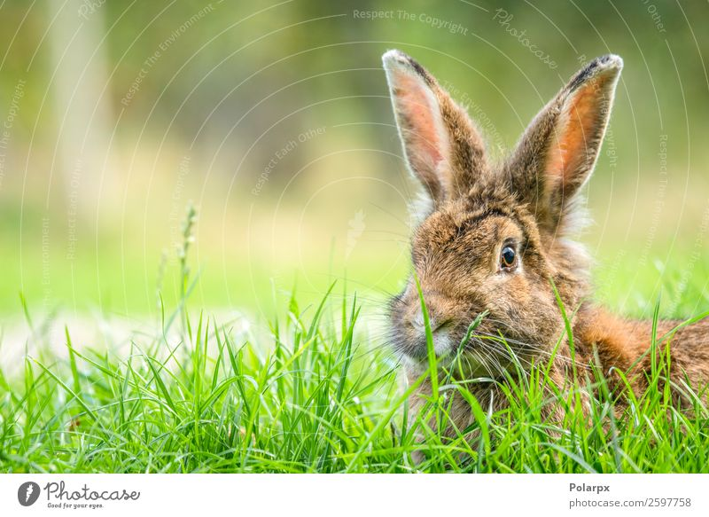 Rabbit in the spring Nature Summer Green White Animal Eating Meadow Grass Small Brown Gray Wild Cute Observe Easter Lawn
