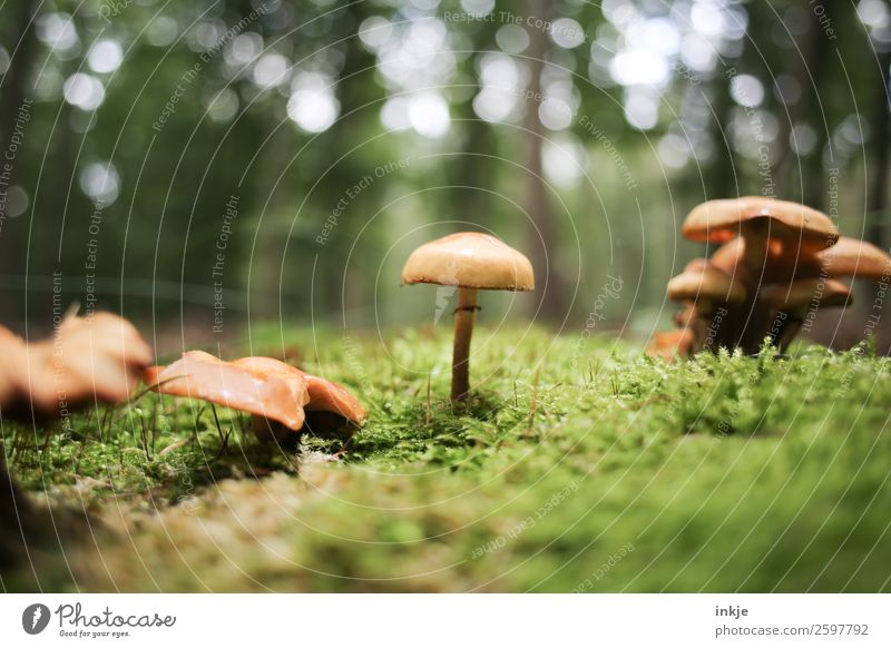 One mushroom, in the middle, next to other mushrooms. Moss downstairs. Nature Plant Autumn Beautiful weather Mushroom Woodground Forest Stand Fresh Small
