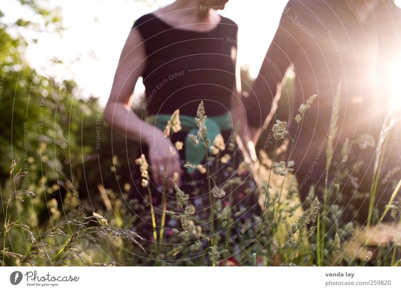 Human being Woman Man Youth (Young adults) Beautiful Summer Sun Adults Relaxation Love Meadow Feminine Life Grass Happy Couple