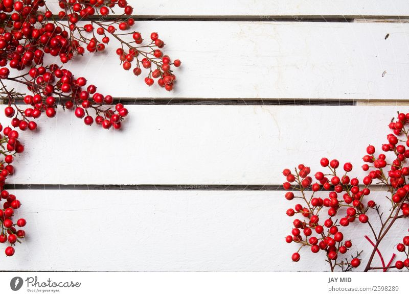 nandian christmas branch with red berries white wood background Nature Christmas & Advent Colour White Red Joy Winter Wood Feasts & Celebrations Copy Space
