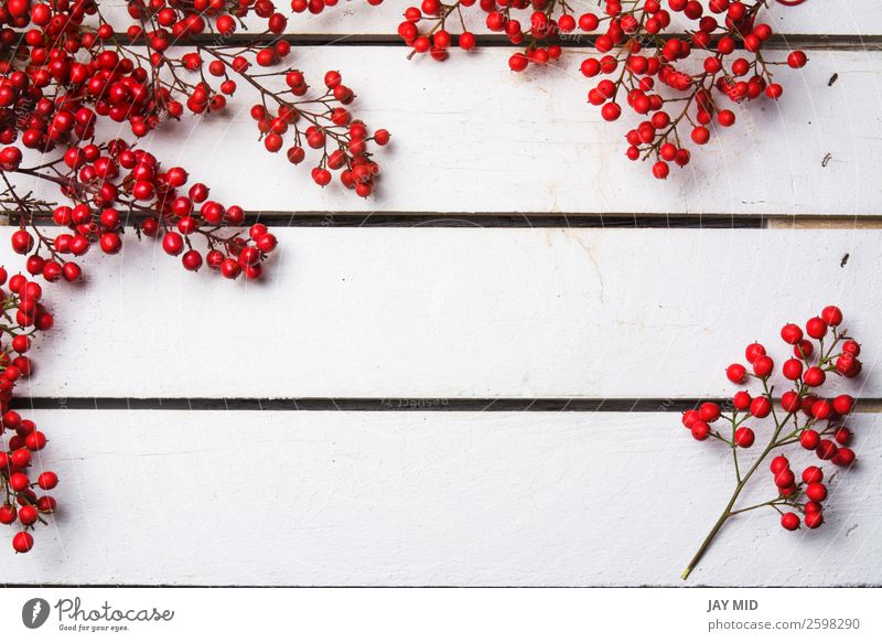 nandian christmas branch with red berries, white wood background Nature Christmas & Advent Colour White Red Joy Winter Feasts & Celebrations Copy Space Bright