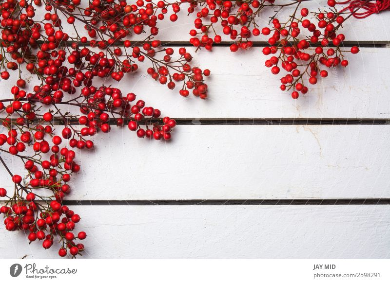 Red christmas nandian , frame background Nature Christmas & Advent Plant Colour White Joy Winter Wood Feasts & Celebrations Copy Space Bright Decoration