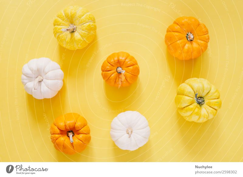 Flat lay style of fresh organic pumpkins Nature White Life Autumn Yellow Natural Style Feasts & Celebrations Design Decoration Fresh Modern Vantage point
