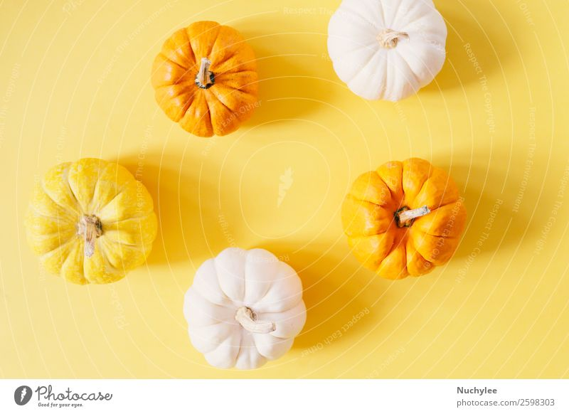 Flat lay style of fresh organic pumpkins Nature White Life Yellow Autumn Natural Style Feasts & Celebrations Design Decoration Fresh Modern Vantage point