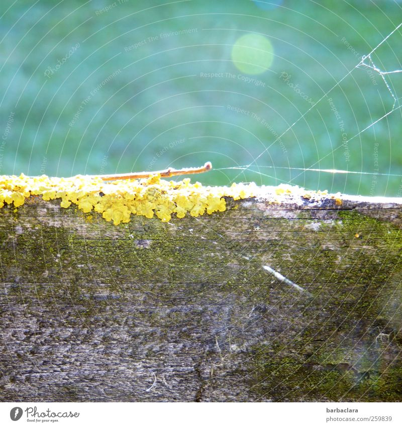 Nowhere Land Environment Nature Sunlight Beautiful weather Moss Lichen Meadow Wall (barrier) Wall (building) Spider's web Wooden fence Esthetic Bright Natural
