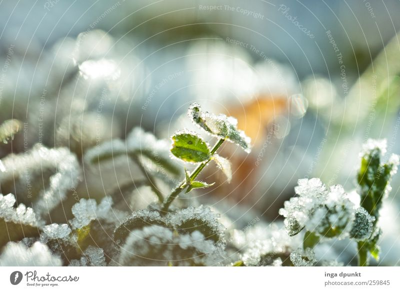 Nature Beautiful Plant Winter Leaf Environment Cold Emotions Garden Moody Park Ice Field Fog Glittering Climate
