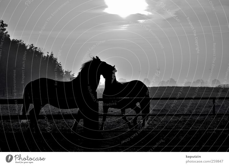 Nature Vacation & Travel Animal Black Relaxation Environment Dark Freedom Gray Happy Friendship Moody Contentment Esthetic Happiness Horse