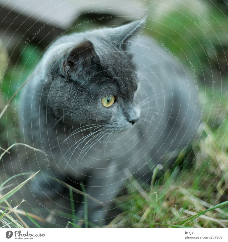Cat Animal Meadow Emotions Garden Moody Baby animal Cute Observe Curiosity Discover Watchfulness Interest Pet Crouch Alert