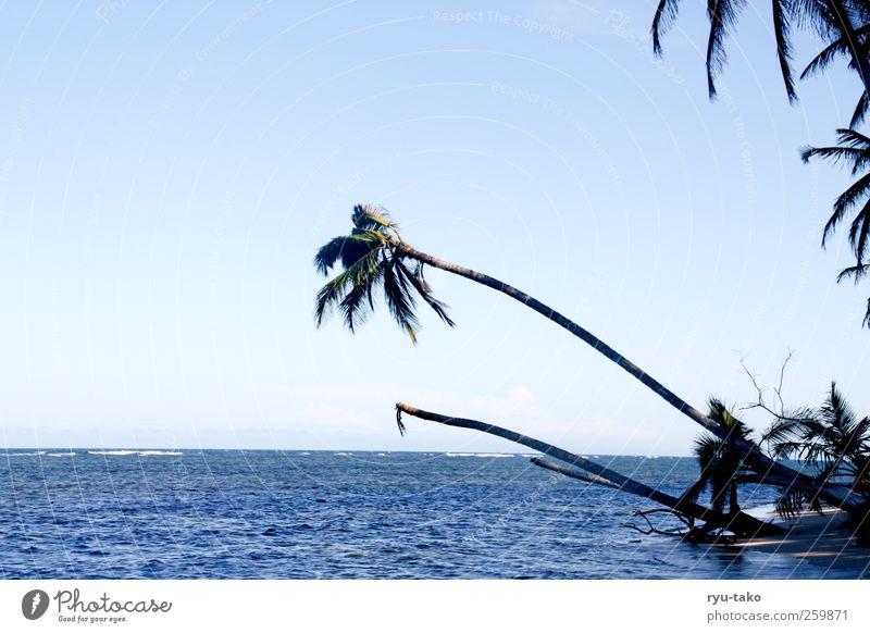 Sky Nature Blue Water Plant Ocean Calm Freedom Sand Coast Contentment Esthetic Island Bushes Pure Near