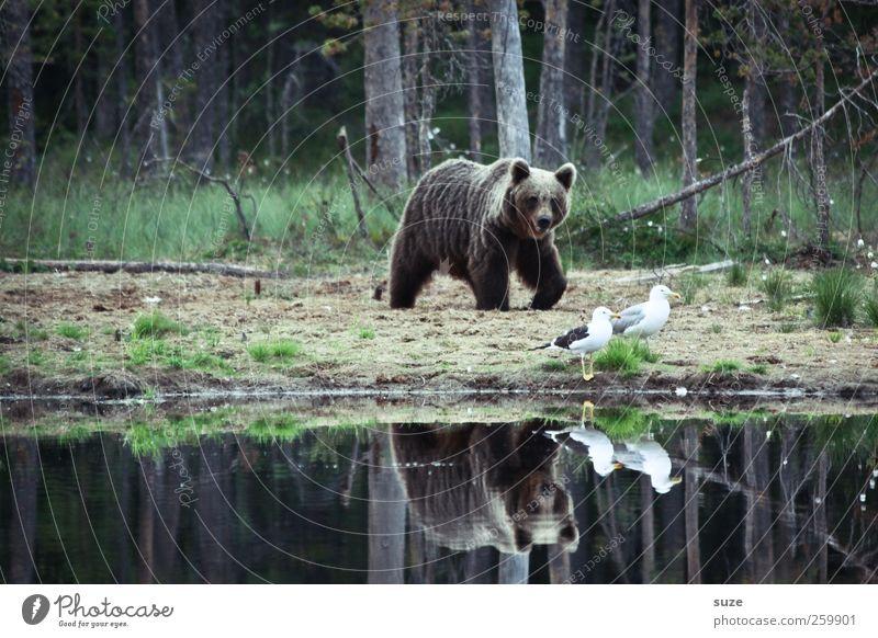 Nature Landscape Animal Forest Environment Lake Brown Bird Fear Power Wild Wild animal Threat Observe Lakeside Curiosity