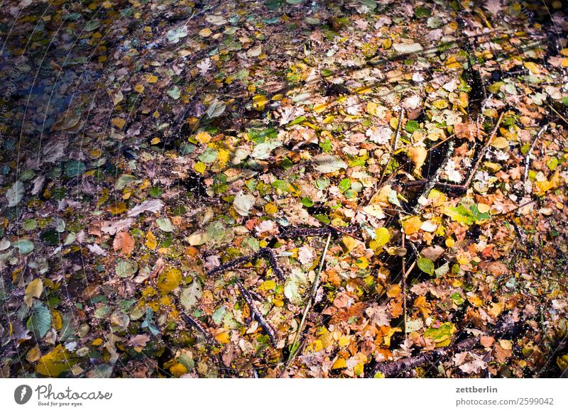 Autumn leaves in the Jungfernheide pond Nature Plant Calm Copy Space Depth of field Leaf Multicoloured Water Lake Pond Float in the water Background picture