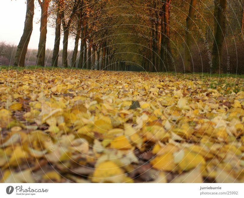 Bos with bladeren Autumn Grasp Bundle Tree Brochure bladerdek
