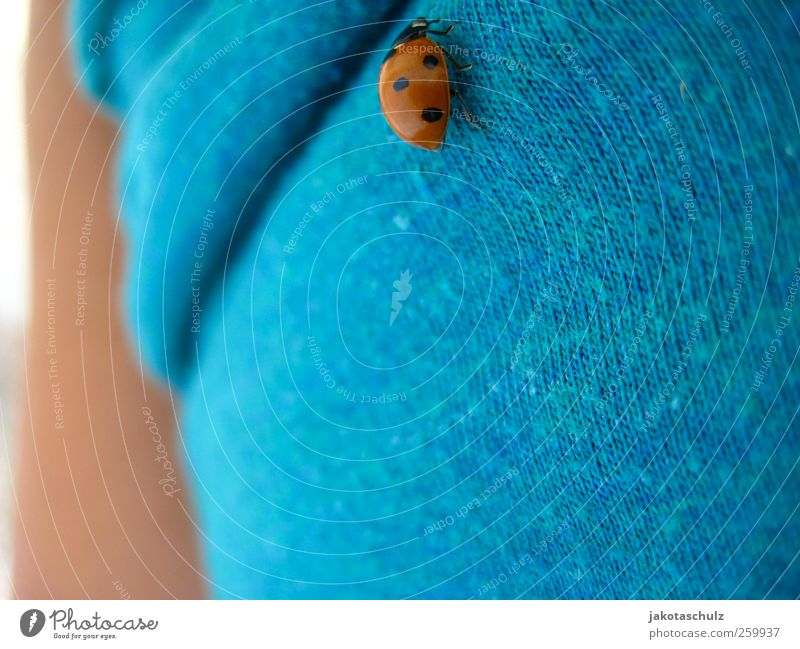 ladybug Human being Feminine Young woman Youth (Young adults) Life Stomach 1 18 - 30 years Adults Environment Nature Landscape Plant Summer Beautiful weather