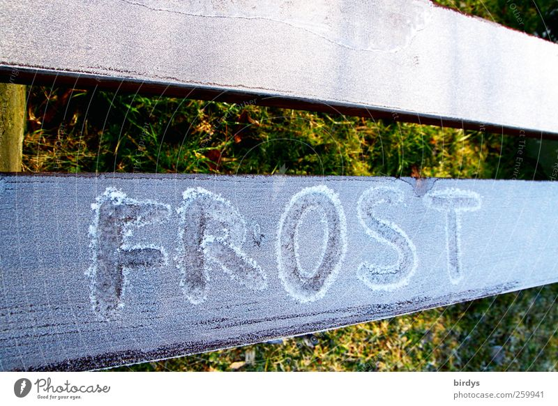 Winter Cold Bright Park Ice Climate Esthetic Characters Perspective Frost Letters (alphabet) Information Frozen Wooden board Word Hoar frost
