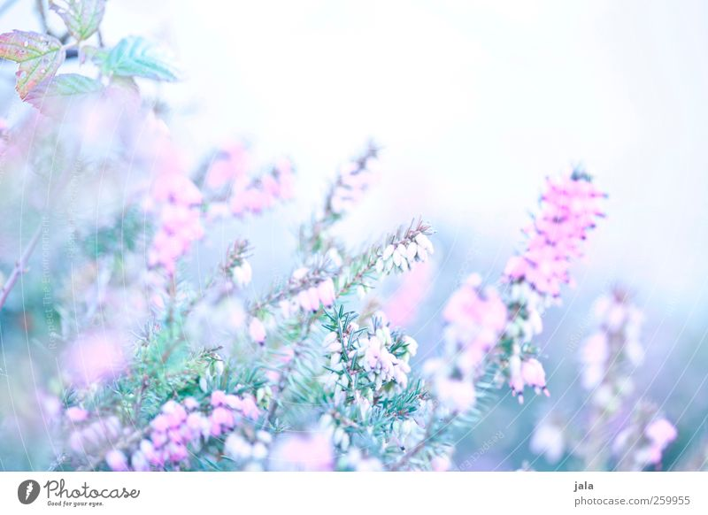 Nature Blue White Green Plant Flower Environment Blossom Spring Bright Pink Natural Esthetic