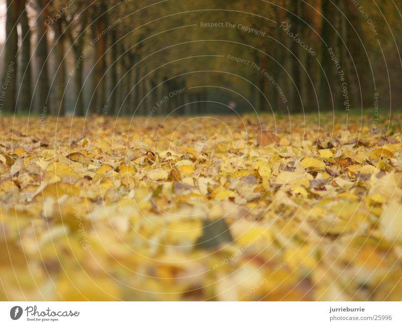 bossy Autumn Grasp Bundle Tree Brochure bladerdek