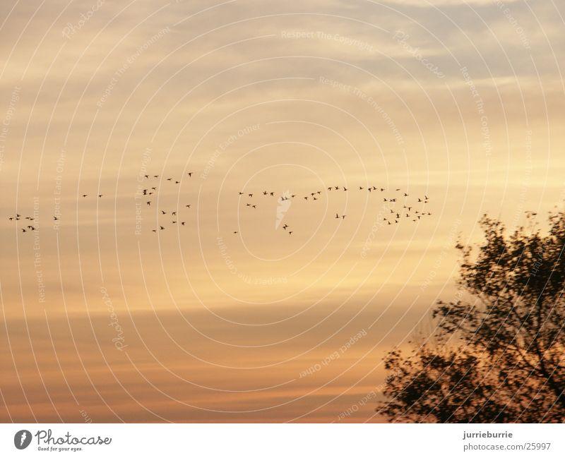 birds flying to the south Bird Autumn luht bird lapetite